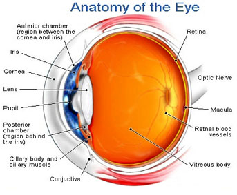 faq_eye san leandro optometry group frequently asked questions